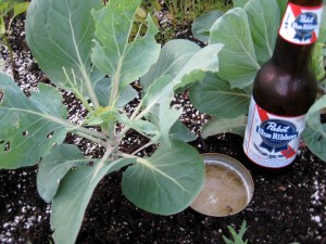 brussel sprouts & pbr